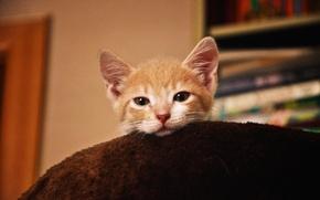 Picture animals, kitty, sleep, Cat