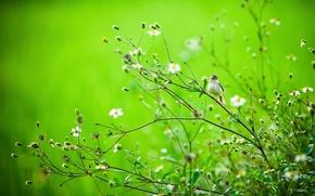 Wallpaper summer, branches, nature, bird