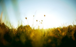 Picture the sky, grass, the sun