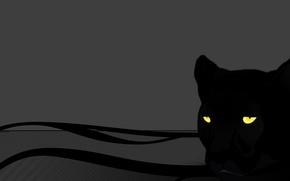 Wallpaper cat, eyes, grey, Panther