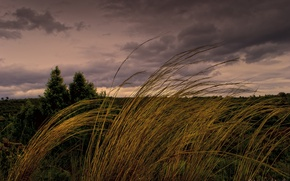 Picture grass, clouds, the wind