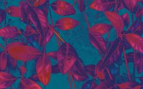 Picture leaves, plant, color