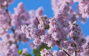 Picture macro, flowers, nature, spring, blur, Lilac