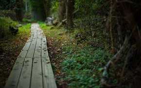 Picture road, forest, summer, nature, beauty, plants, path