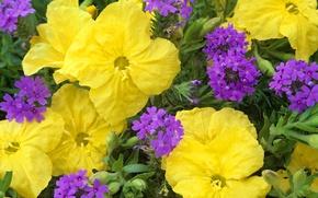 Picture plant, petals, garden, meadow, flowerbed