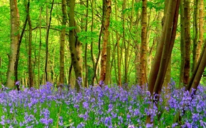 Picture forest, grass, trees, flowers
