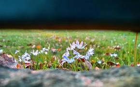 Wallpaper focus, grass, flowers, glade, nature