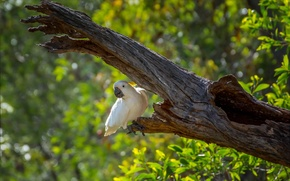 Picture greens, tree, bird, parrot, bokeh