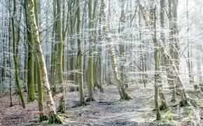 Picture frost, autumn, forest, trees