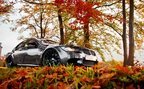 Picture BMW, autumn, leaves, e92, fall