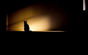 Picture cat, light, room, shadow