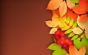 Wallpaper leaves, Rowan, autumn