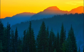 Picture spruce, Last Light, orange sunset, Mt Rainier, Washington State, Don Briggs, blue mountains