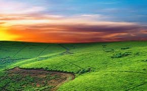 Wallpaper field, the sky, horizon, line