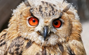 Wallpaper Owl, feathers, eyes