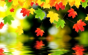 Wallpaper autumn, leaves, water, reflection, maple