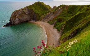 Picture sea, flowers, rock, England