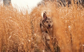 Picture grass, nature, dog