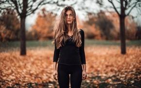 Picture autumn, Martin Kuhn, Zazou