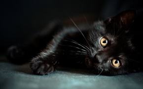 Picture kitty, black, eyes, muzzle, wallpapers