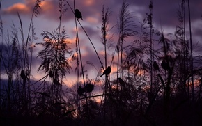 Picture sunset, birds, nature, sparrows, Serena Pirredda Photography