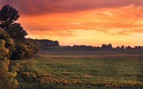 Picture field, sunflowers, sunset, the evening
