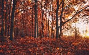 Wallpaper nature, forest, autumn, paint