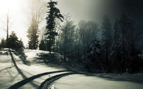Picture winter, road, forest, snow