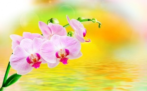 Wallpaper orchids, pink, water, closeup, glare, background, branch, flowers