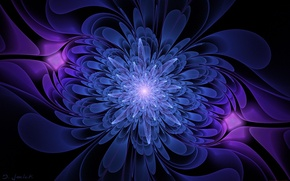 Picture flower, graphics, black background, blue and purple color