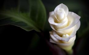 Wallpaper tenderness, flowers, petals, flowers, macro