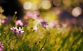 Picture flowers, nature, plants, blur, bokeh