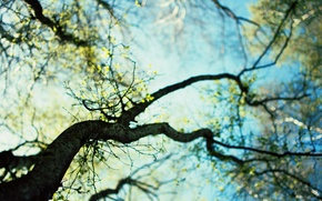 Picture the sky, leaves, trees, nature, background, branch, Wallpaper, spring, day, flowering, wallpapers