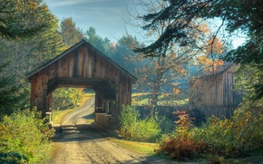 Picture road, autumn, forest, trees, bridge, Nature