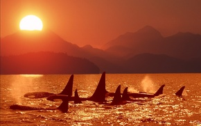 Picture sea, sunset, Orcas