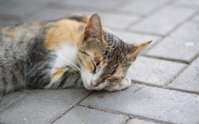 Wallpaper cat, cat, paw, sleep, red, sleeping, lies, spotted
