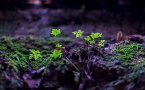 Picture leaves, nature, sprouts, earth, plants