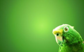 Picture green, background, bird, parrot