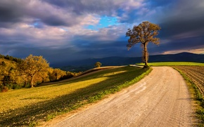 Picture the sky, clouds, light, clouds, nature, tree, field, Italy