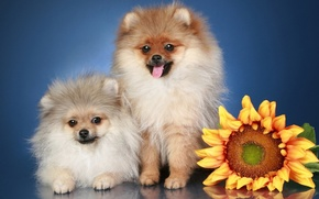 Picture dogs, flowers, pussies