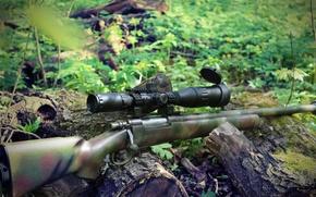 Picture spring, sniper, rifle, sniper, rifle, 2016, M24