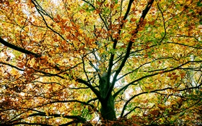 Picture autumn, branches, tree, foliage