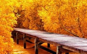 Picture autumn, trees, pier, pierce, the bridge