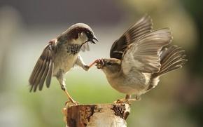 Picture paws, beak, sparrows
