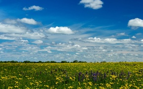 Picture field, summer, the sky, the sun, clouds, yellow, dandelions