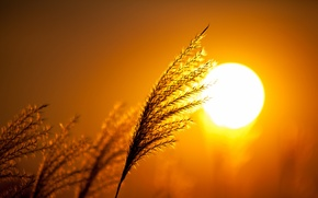 Picture the sky, the sun, macro, sunset, plant, silhouette