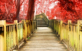 Picture trees, red, background, tree, widescreen, Wallpaper, ladder, track, stage, wallpaper, steps, different, widescreen, background, full …