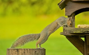 Picture the situation, protein, rodent, feeder