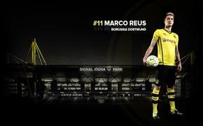 Picture wallpaper, sport, football, player, Borussia Dortmund, Marco Reus, Signal Iduna Park