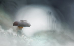 Picture cold, frost, snow, white, mushroom